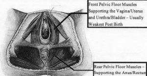 Pelvic Floor Core Work Part 1